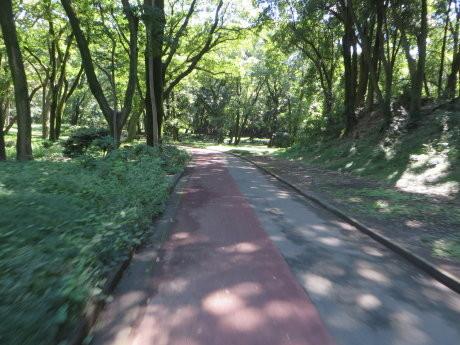 岩倉橋までサイクリング