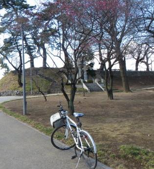 前橋公園の紅梅、咲き始めました
