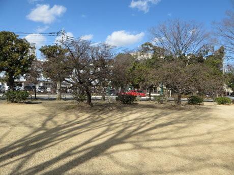 市之坪公園の河津桜