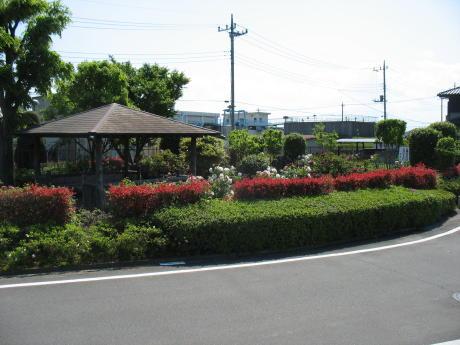 サイクリングロード沿いにある牡丹の咲く公園
