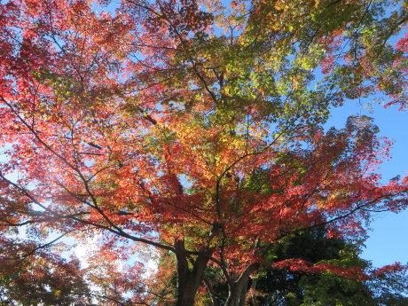 少林山の紅葉