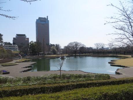 前橋公園のソメイヨシノ