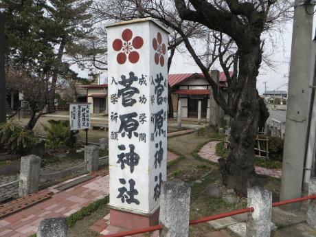 菅原神社の梅の花が見頃です