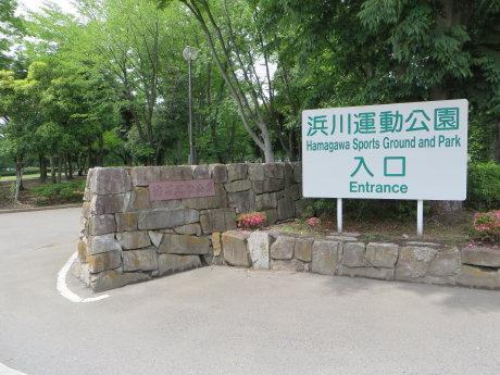 浜川運動公園の花菖蒲