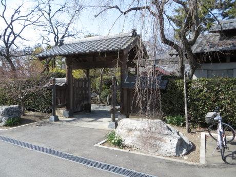 慈眼寺のサンシュユが見ごろです