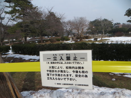 敷島公園 松林の様子