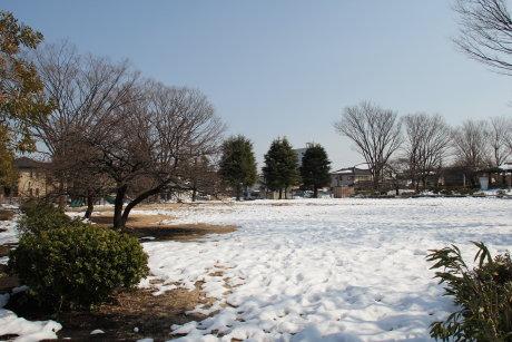 市之坪公園の河津桜は大丈夫でした^^