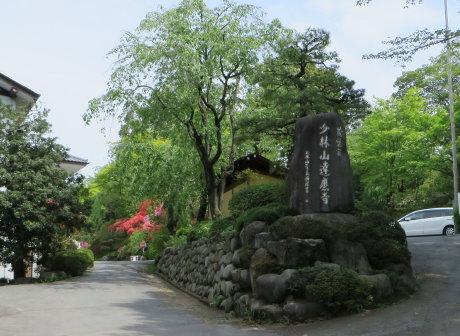 ツツジが見頃の達磨寺