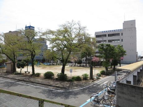 新前橋公園の八重桜