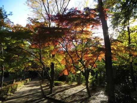 群馬の森で秋を感じてきました^^