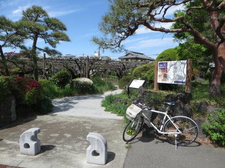 「須賀の園」の藤の花は