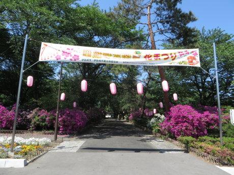 ツツジが綺麗な華蔵寺公園