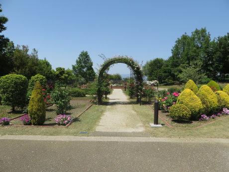 玉村町北部公園のばらも綺麗です