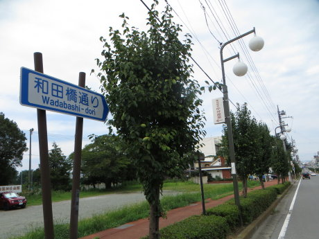 和田橋通りの花梨の実