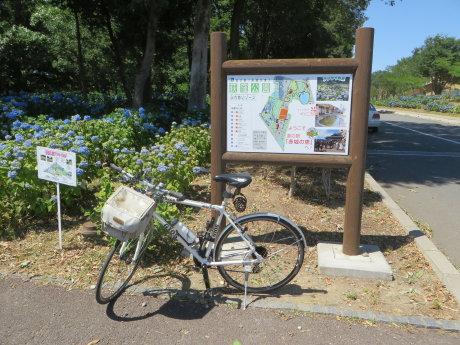 荻窪公園の紫陽花はまだ・・・