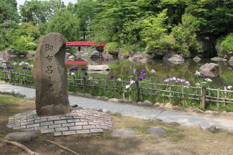 花菖蒲が咲く御布呂が池へ再び