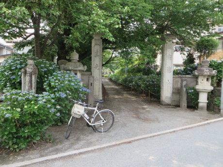 渋川のあじさい寺