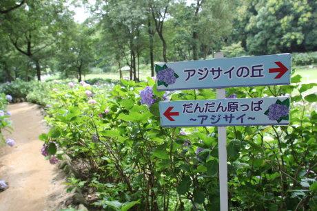 荻窪公園の紫陽花