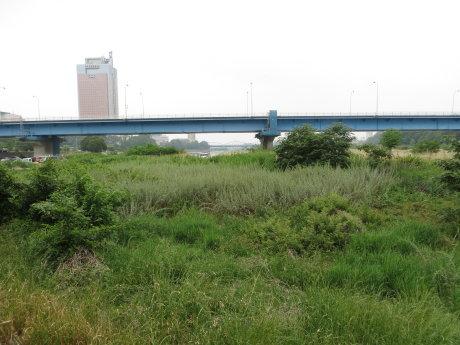 グリーンドーム前橋の近くにいた雉