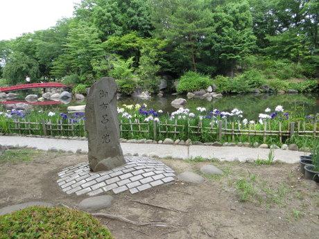 浜川公園の花菖蒲が見頃です