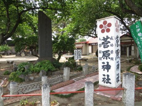 菅原神社の梅は収穫されてました