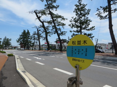 前橋松並木も変わりました