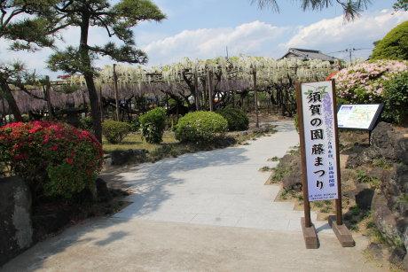 須賀の園 藤まつりへ