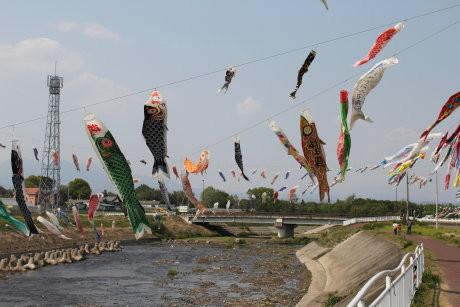 粕川沿いに沢山の鯉のぼりが