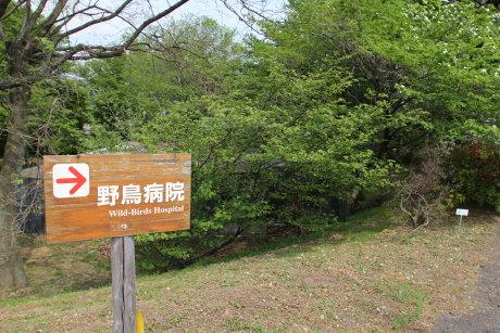 林業試験場には野鳥病院も