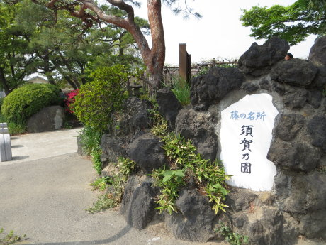 藤の名所、須賀乃園へ