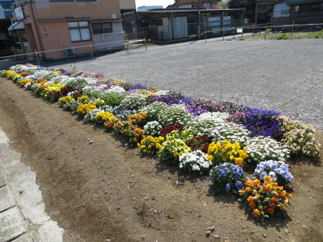 伊勢崎の街も花で彩られています^^