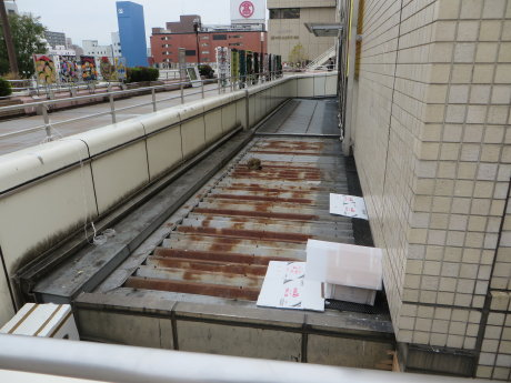 高崎駅の怪我した野良猫