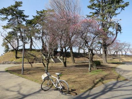 前橋公園の梅の花も