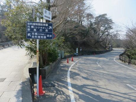染料植物園の福寿草