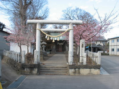 鏡神社にも早咲きの桜の花