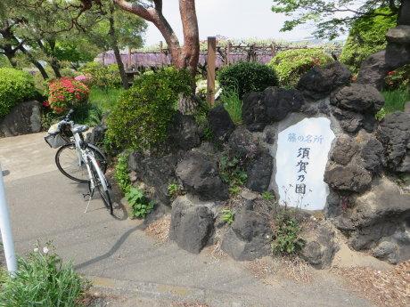 須賀の園の藤の花は?