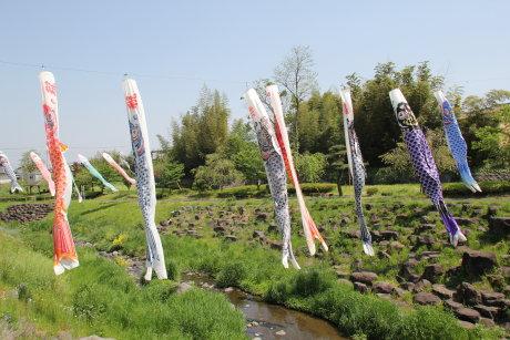 吉岡川の鯉のぼり