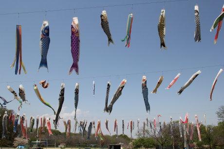 板井根石運動公園の鯉のぼり