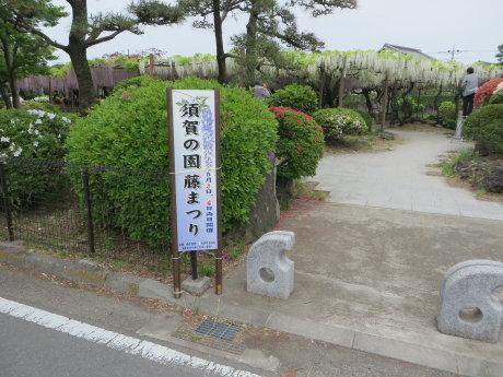 須賀の園藤まつり