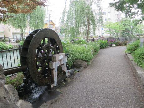 広瀬川詩の道は紫陽花が見ごろ