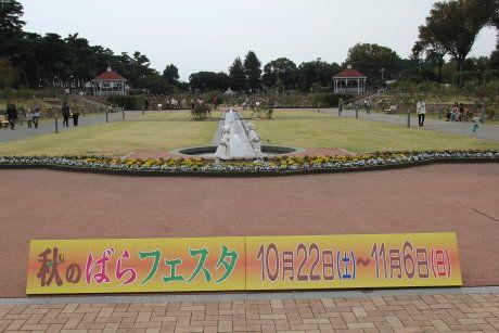 秋のバラフェスタが始まった敷島公園のばら園へ