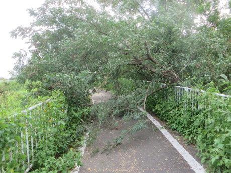 サイクリングロードに倒木