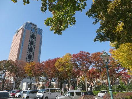 街なかの街路樹も色づいてきました