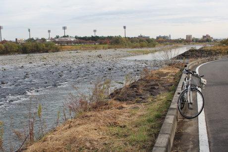 前橋市内の利根川を遡上する鮭