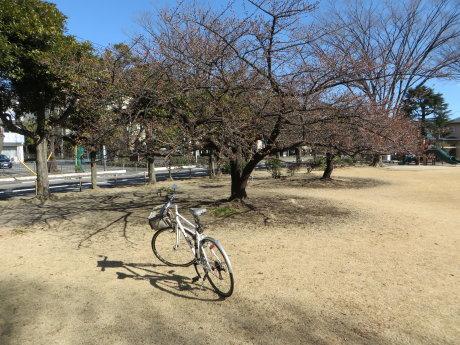 河津桜の本格開花にはもうちょっと