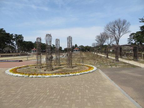 敷島公園ばら園には薔薇以外の花も