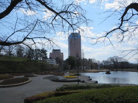 前橋公園のソメイヨシノは・・・