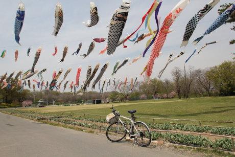 根石公園にはたくさんの鯉のぼり