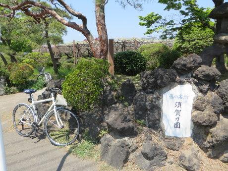 須賀の園の藤の花はまだ早かったです