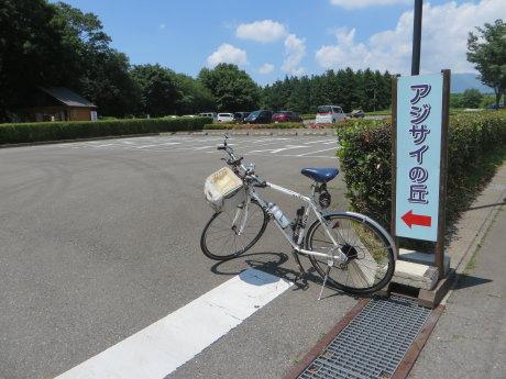 荻窪公園の紫陽花はまだ早かった